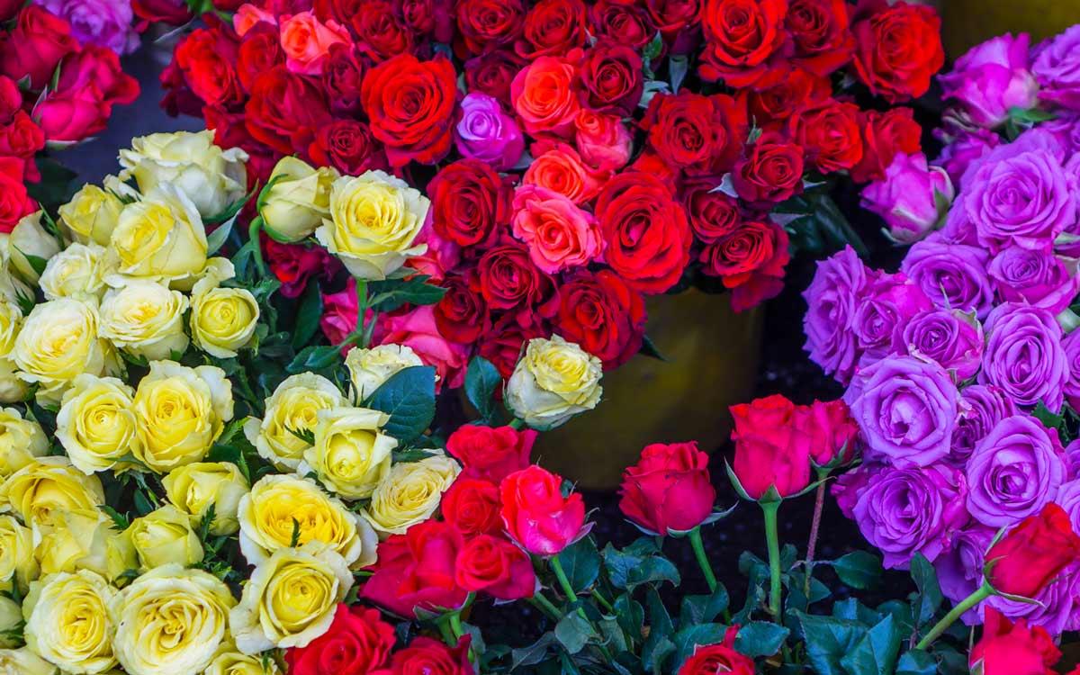 cveta-roz1